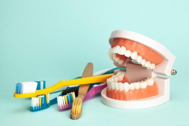 Modelo de mandíbula e escovas de dentes conceito de como escovar os dentes corretamente ou como escolher a escova de dentes