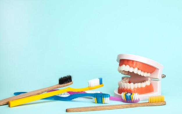 Modelo de mandíbula e escovas de dentes o conceito de como escovar os dentes corretamente ou escolher uma escova de dentes
