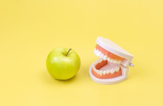 Modelo de plástico de uma mandíbula humana e uma maçã