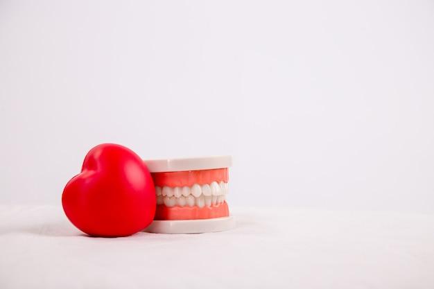 Modelo dentário de dentes isolados no fundo branco, conceito de saúde.