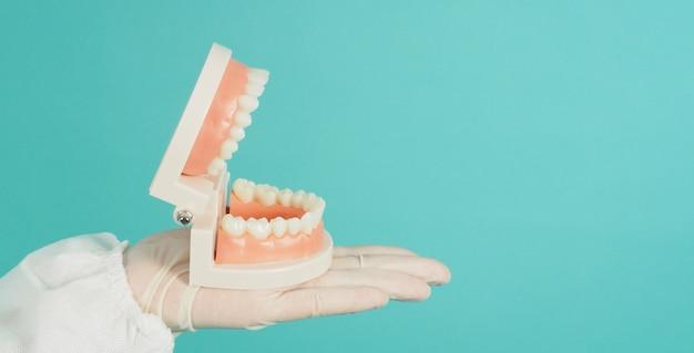 Modelo ortodôntico de dentes na mão que usa luva médica em fundo verde menta ou azul tiffany.