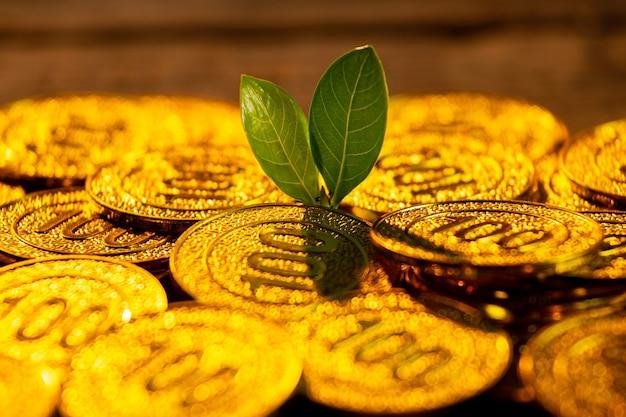Moedas de ouro com planta jovem. conceito de aumento de crescimento monetário.