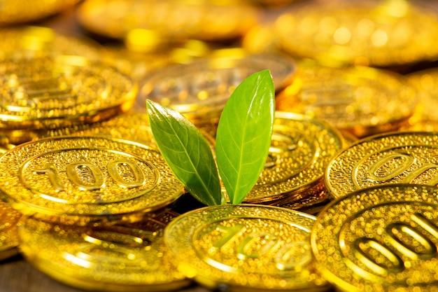 Moedas de ouro com planta jovem