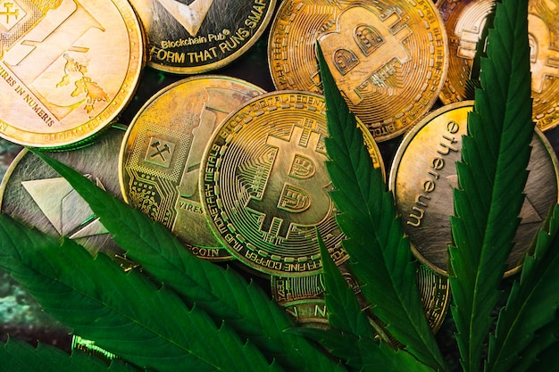 Moedas de ouro com símbolo de moeda criptográfica e folhas de cannabis.