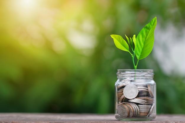 Moedas em frasco de vidro com árvores crescendo para salvar o conceito de dinheiro