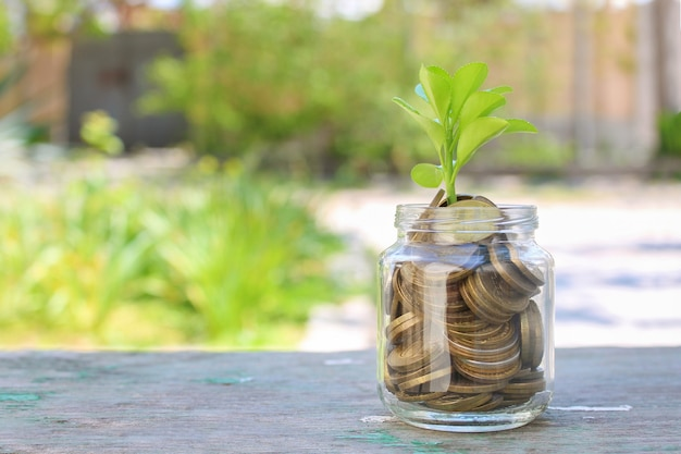 Moedas em frasco de vidro e árvore em crescimento. conceito de investimentos lucrativos em dinheiro.