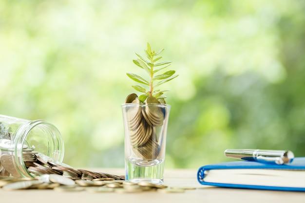 Moedas em um copo com uma pequena árvore