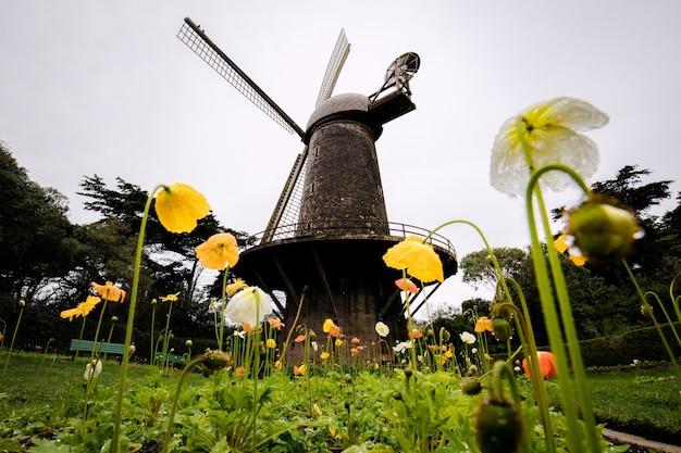 Moinho de vento preto rodeado de flores amarelas