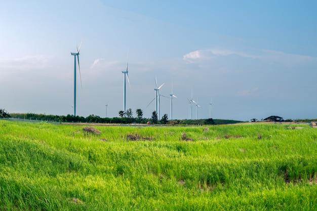 Moinhos de vento ecológicos para produção de energia elétrica no campo de arroz verde.