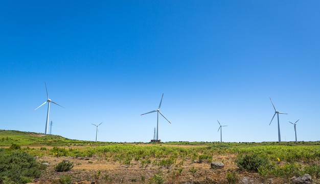Moinhos de vento no vale