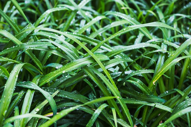 Moita de grama arbusto molhado