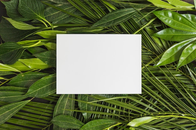 Moldura branca retangular sobre folhas verdes