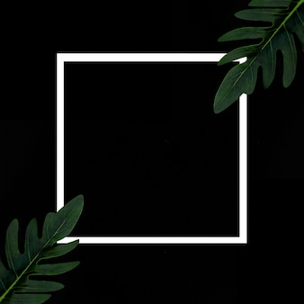Moldura branca sobre um fundo preto com plantas tropicais (abstrct mal escrito en esta y otra tarea)