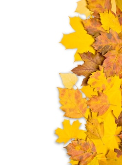 Moldura de borda de folhas coloridas de outono isoladas em branco