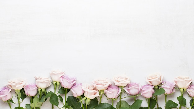 Moldura de lindas flores
