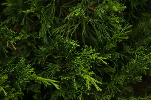 Moldura de natal no fundo da árvore de natal, tema de ano novo. papel de parede para o seu dispositivo