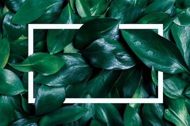 Moldura de papel de parede feita de folhas verdes escuras e moldura branca.