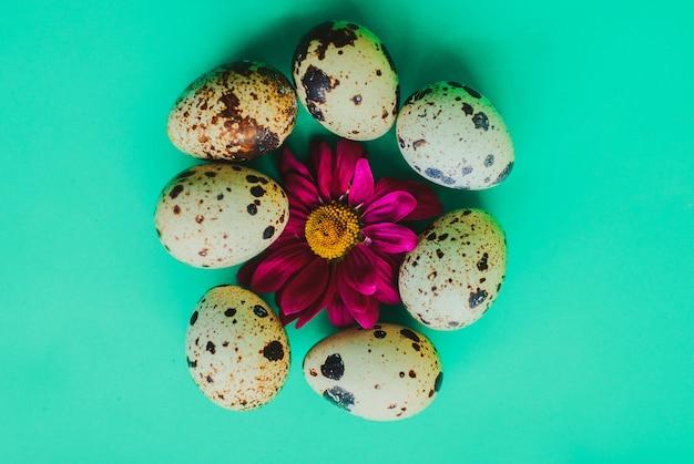 Moldura de páscoa feita de ovos de codorna e flores roxas
