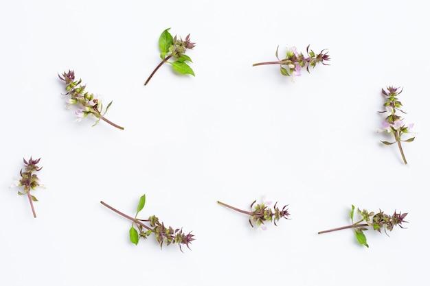 Moldura feita de flor de manjericão doce em branco
