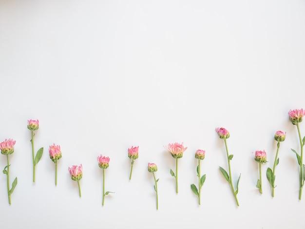 Moldura feita de flores cor de rosa e folhas verdes sobre fundo branco