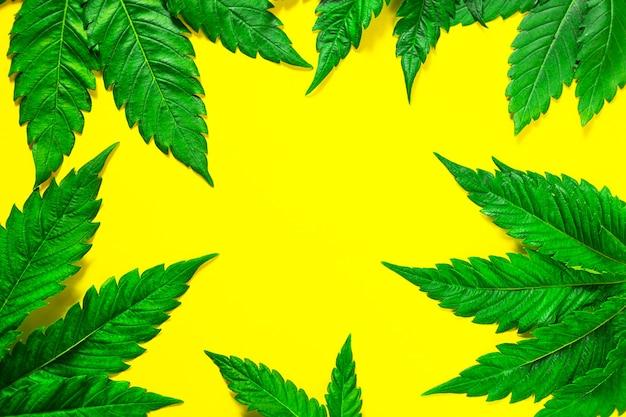 Moldura feita de folhas de cânhamo em um fundo amarelo. close-up de cannabis. a maconha é uma forma de droga e medicina alternativa, recreação. copie o espaço