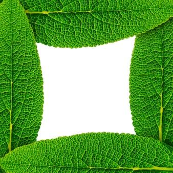 Moldura feita de folhas verdes
