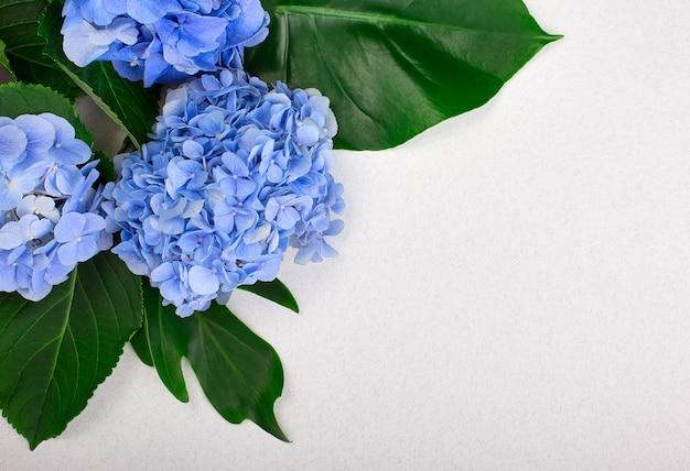 Moldura feita de hortênsia azul e folhas verdes sobre fundo branco. camada plana, vista superior. plano de fundo do casamento.
