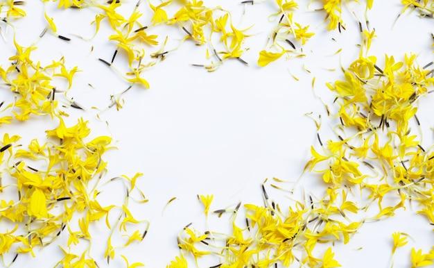 Moldura feita de pétalas de flor de calêndula em branco