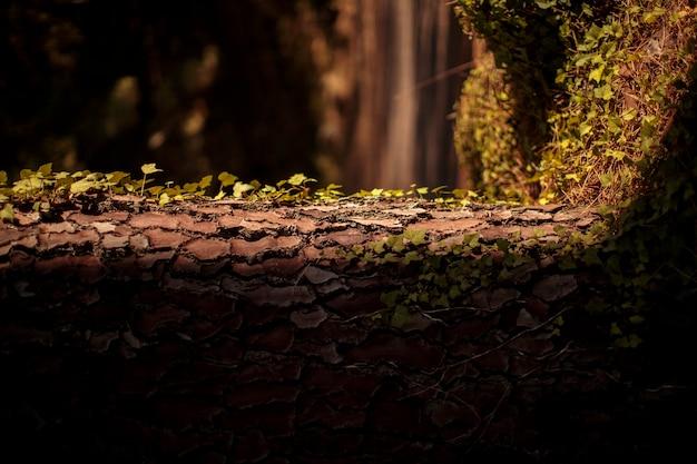 Moldura natural do tronco com folhas e fundo de árvores difusas