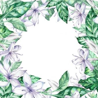 Moldura quadrada aquarela com flores de café branco e folhas verdes.