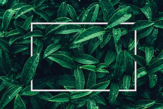 Moldura quadrada layout criativo feito de flores tropicais e folhas com nota de cartão de papel flat lay