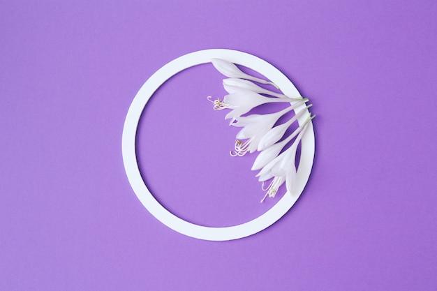 Moldura redonda branca com delicadas flores brancas em fundo lilás. postura plana. composição minimalista de verão e primavera
