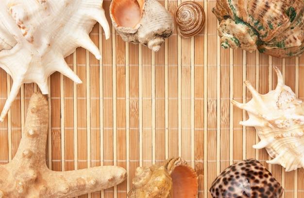 Molduras para fotos de tapetes e conchas do mar