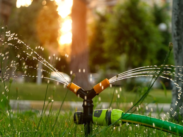 Molhando o gramado com um sistema de irrigação automática ao pôr do sol. cuidado do gramado e conceito de jardinagem.