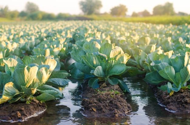 Molhar natural de colheitas agrícolas