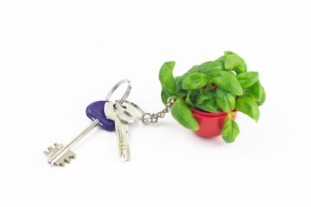 Molho de chaves com uma bugiganga em forma de manjericão verde em uma jarra vermelha isolada. comida vegetariana saudável. ervas orgânicas. close da chave para a saúde