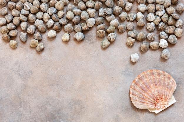Moluscos e vieiras de ressaca crus frescos.