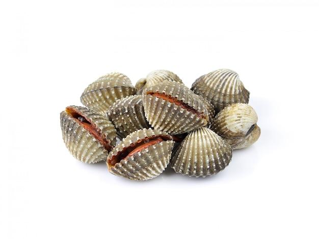 Moluscos frescos frutos do mar na superfície branca