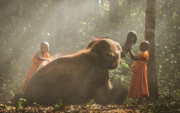 Monges tailandeses andando na selva com bebê elefantes