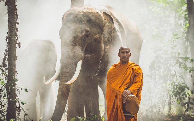 Monges tailandeses andando na selva com elefantes