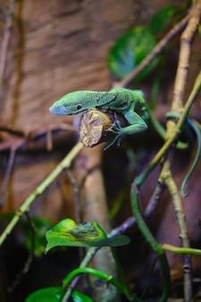 Monitor verde esmeralda em um galho de árvore sob a luz do sol
