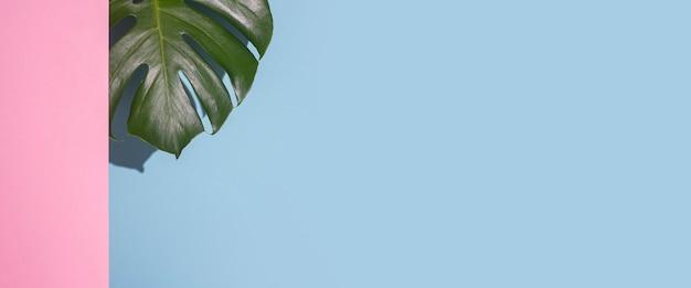 Monstera de folha verde em um fundo azul