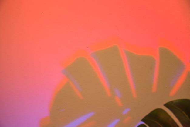 Monstera deixa a sombra no fundo vermelho