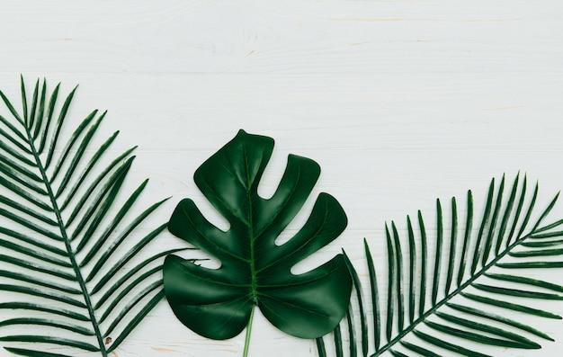Monstera deliciosa e folhas tropicais da palma amarela isoladas no fundo de madeira branco.