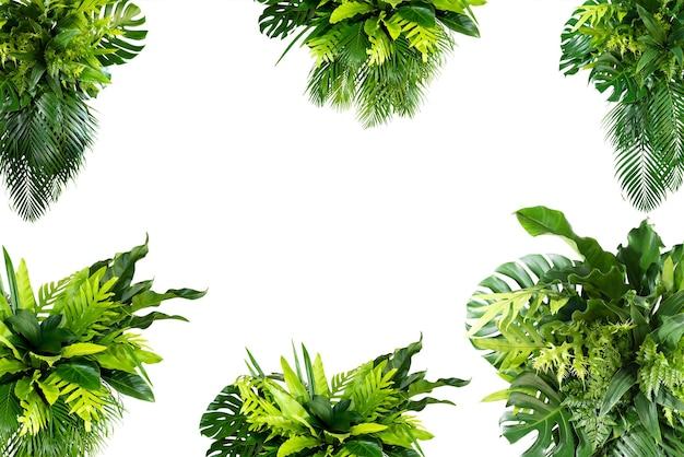 Monstera e palmeira e folhas tropicais folhagem planta arbusto arranjo floral natureza cenário isolado