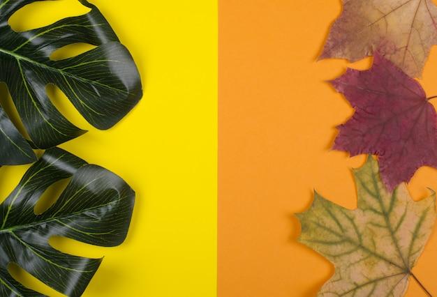 Monstera folhas e folhas de bordo de outono