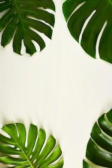 Monstera folhas verdes com espaço para texto
