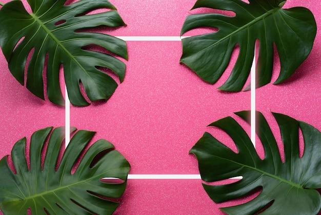 Monstera verde tropical deixa a natureza em um fundo rosa com design de moldura para publicidade criativa