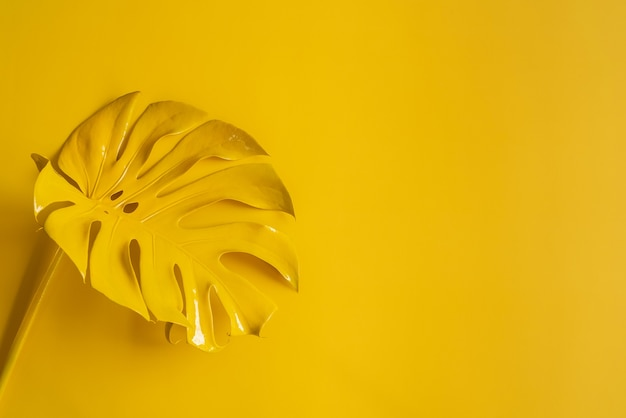 Monstera vista superior folha modelo filodendro isolado em fundo pastel