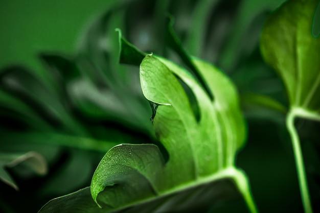 Monstro deixa sobre um fundo verde